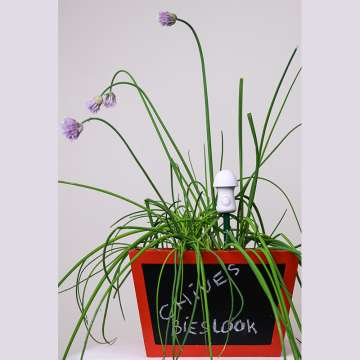Thirsty Light pour Plantes Herbes